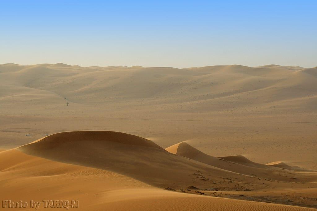 CEO Desert